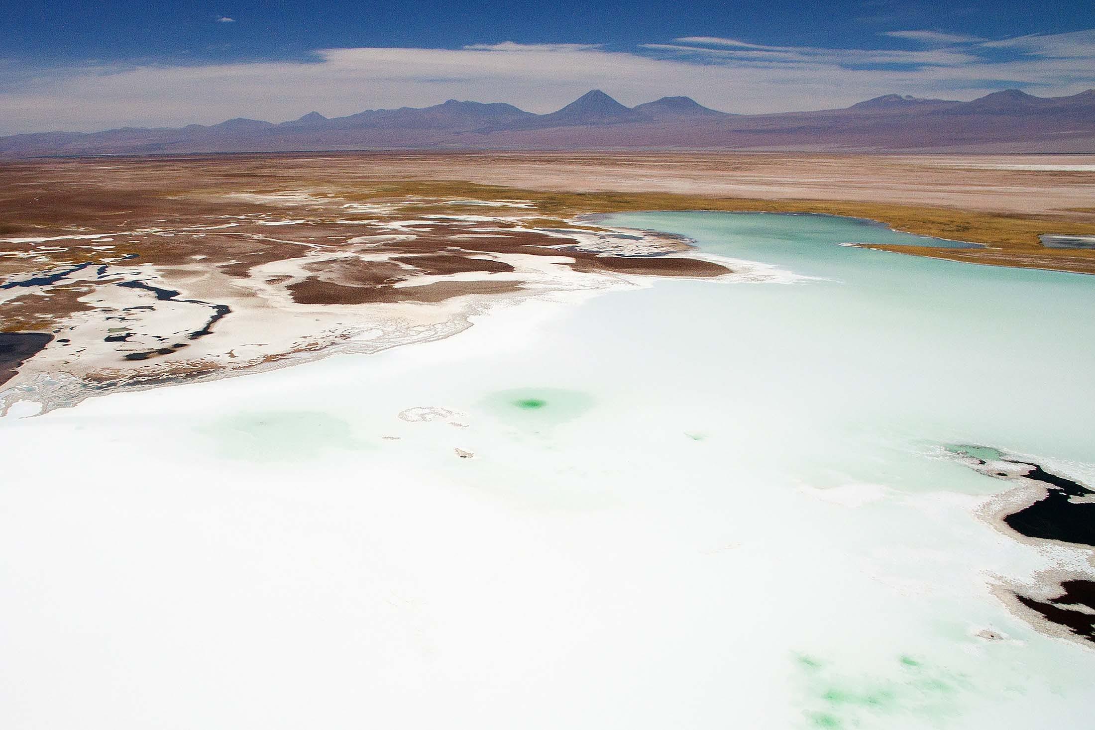 Chilean Flamingos - Atacama Salt Flats, Reserva National Los Flamencos, Antofagasta, chile