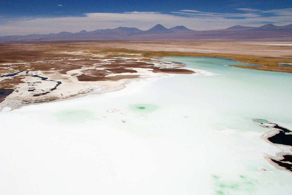 The Atacama Desert flamingos live and feed in these salt flats.