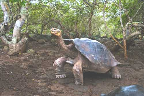 the Galapagos Islands by Steve McCurry