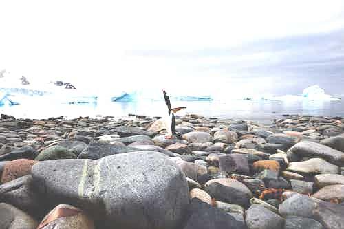 Wildlife photography Antarctica