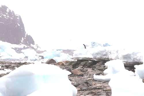Danco Island, Antarctica