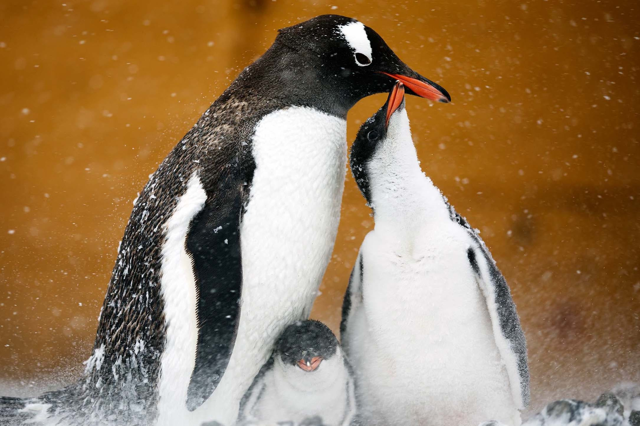 wildlife photography in Antarctica