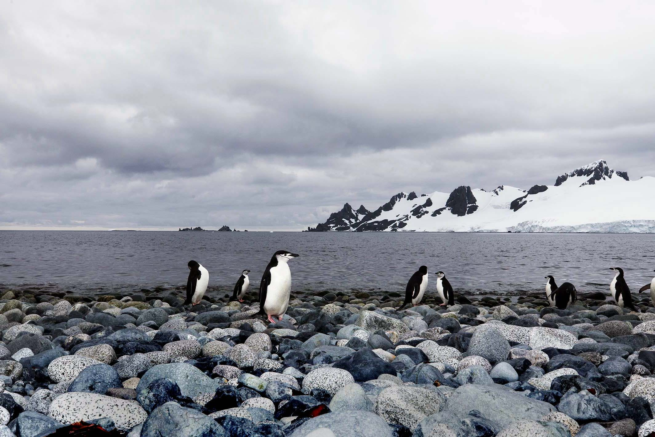 Penguins are perhaps the most popular subject in Antarctica photography.