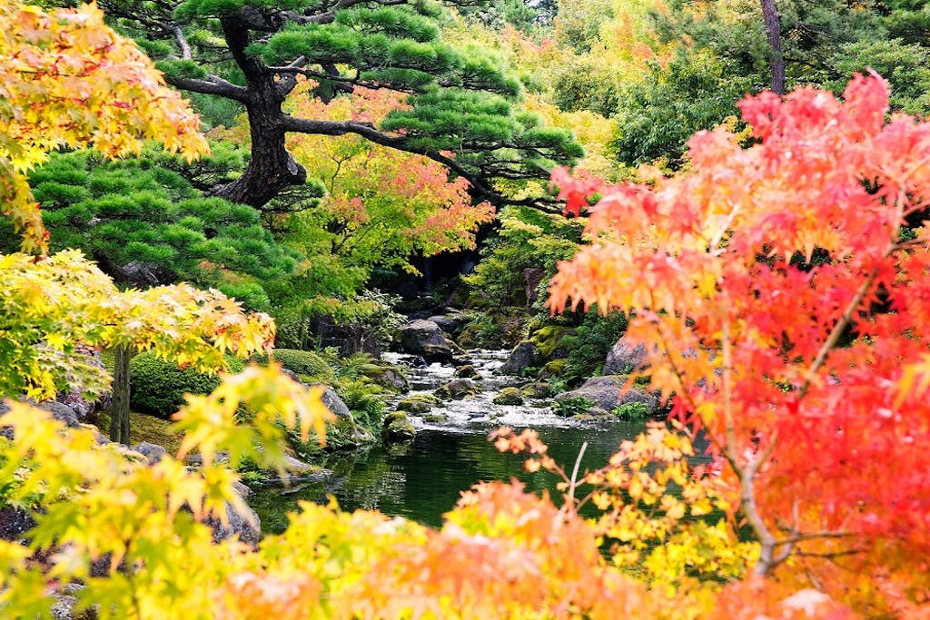 A Japanese garden with koi pond represents love and affection.