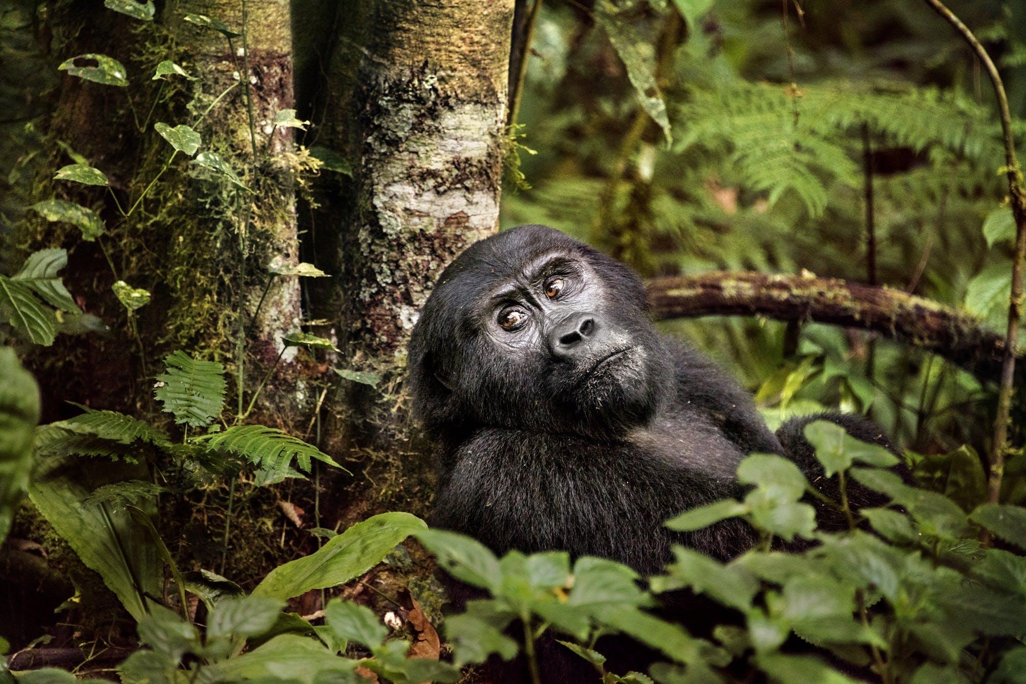 Uganda by Steve McCurry
