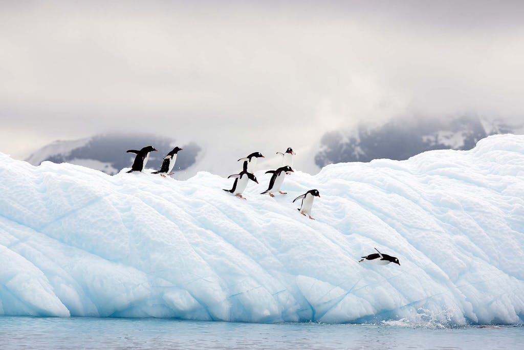 Visit Antarctica for a chance to see Gentoo Penguins and other wildlife.