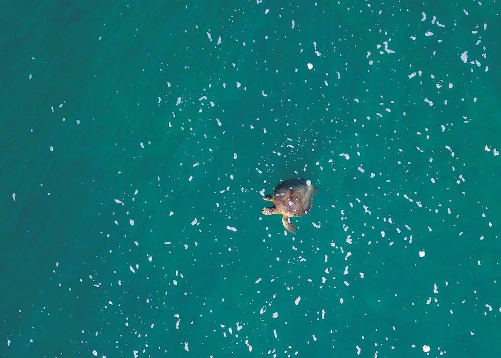 The wildlife in Australian coral reefs includes sea turtles.