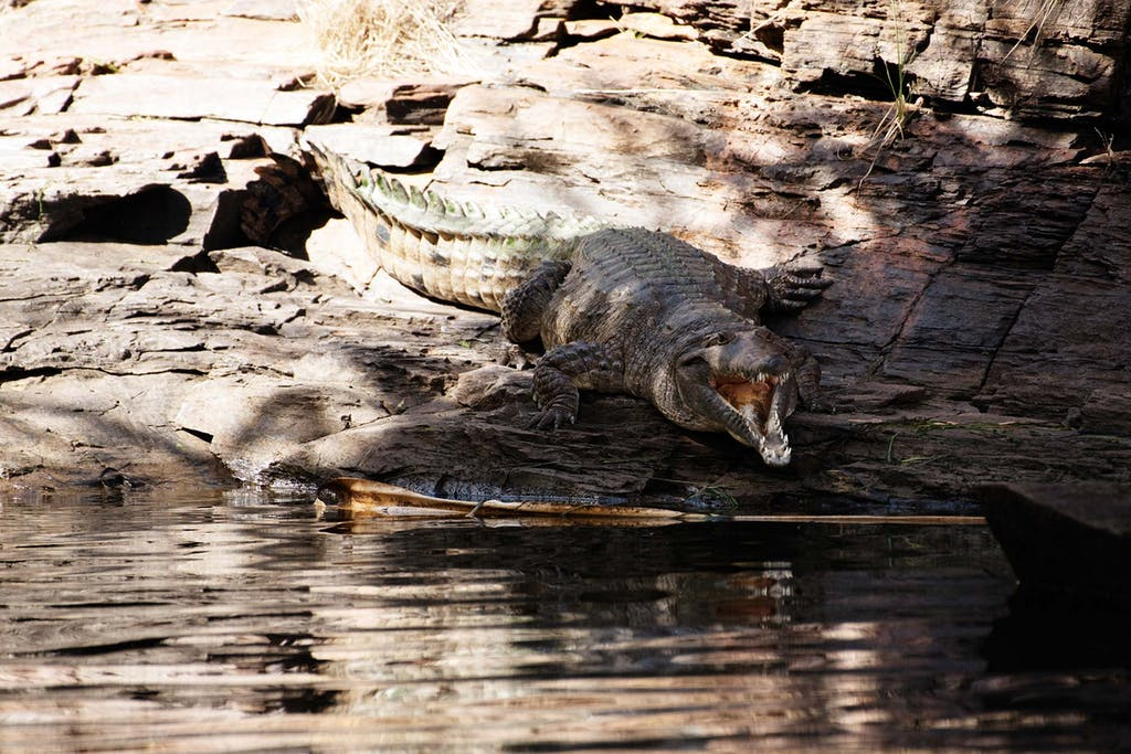 Don't miss a chance to see Ord River's crocodiles.