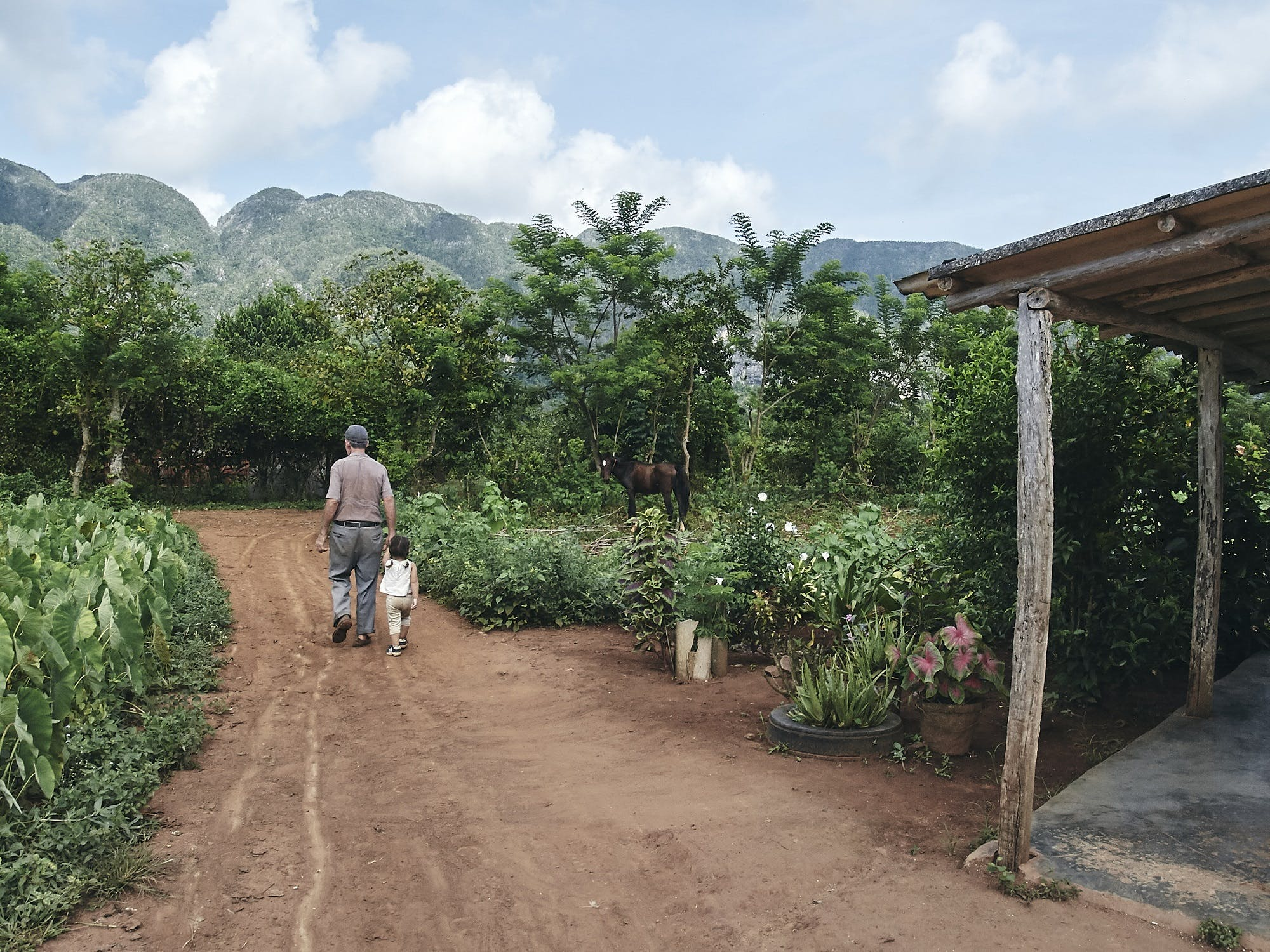 Step back in time on a Valle de Viñales tour.