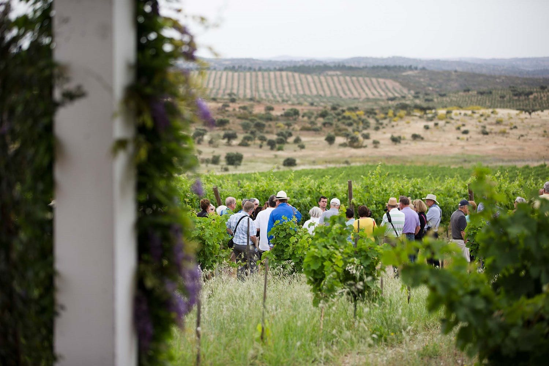 travel hobby ideas - wine tasting