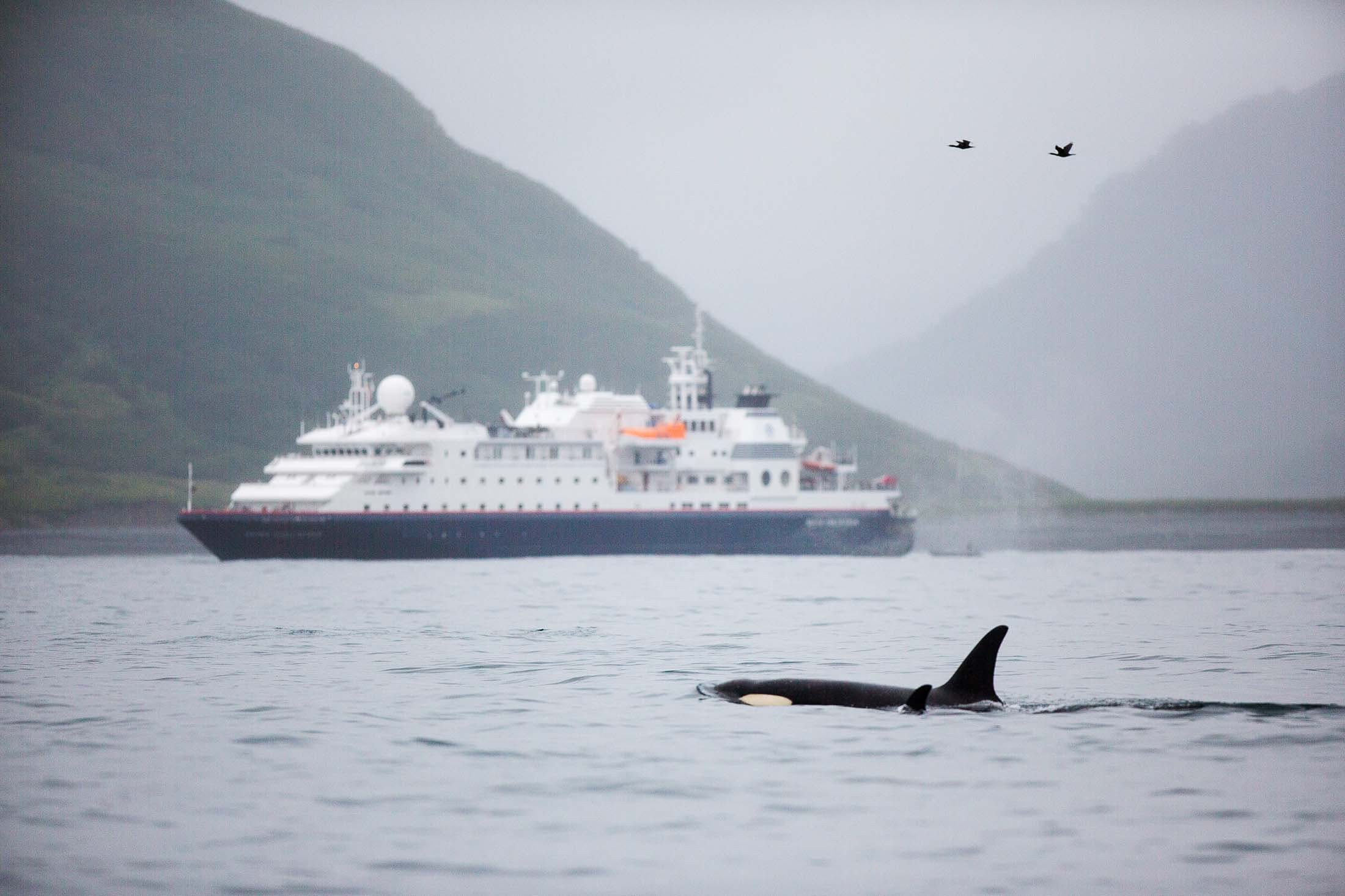 orcas in the wild - russian far east