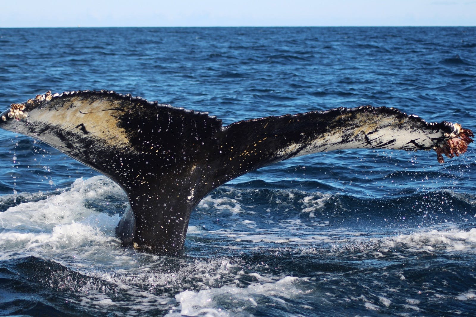 Whale watching in Northern Europe