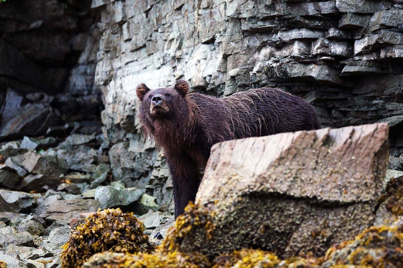 Retirement travel - bear in Alaska