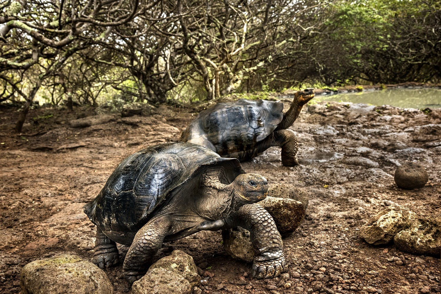 Giant tortoises in the Galapagos Islands by Steve McCurry