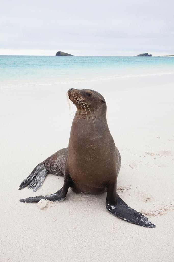 Galapagos sea lion - Wildlife in the Galapagos