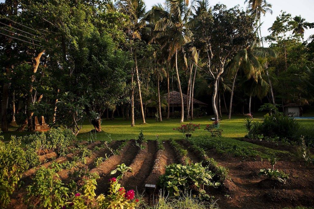 Ayurveda in Sri Lanka