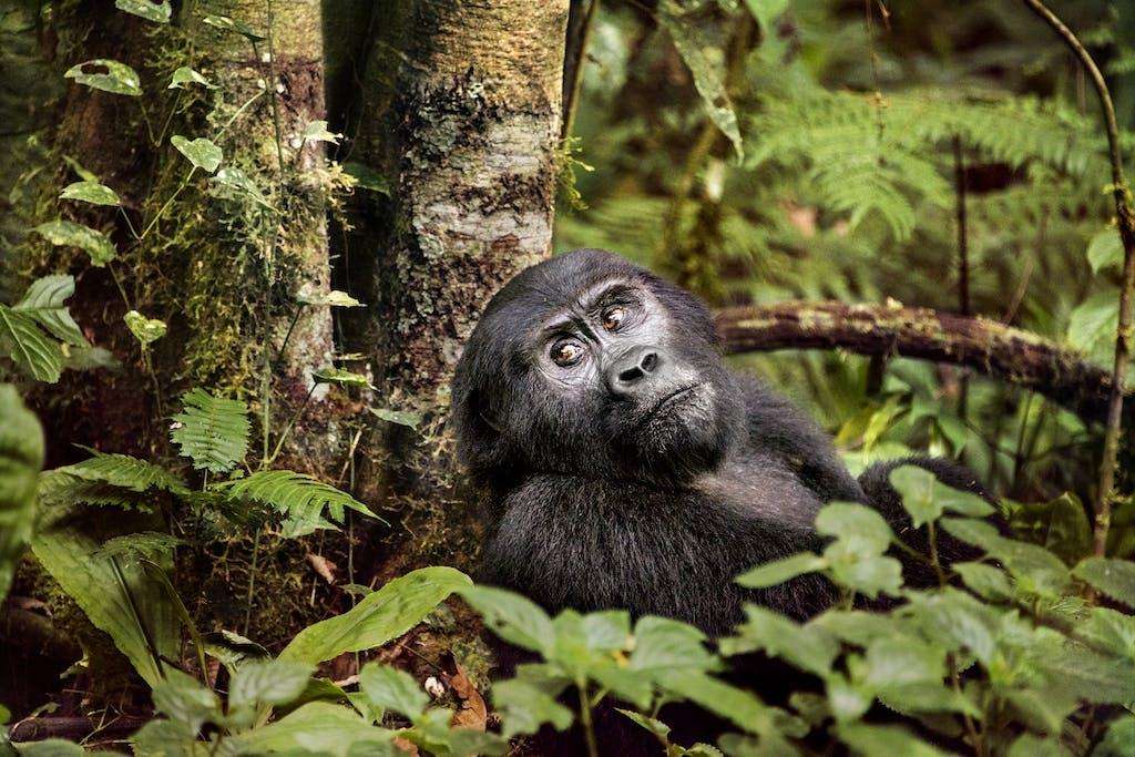 Steve McCurry wildlife photography