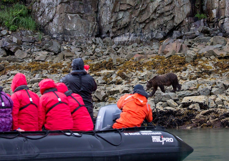 bears catching salmon in Alaska