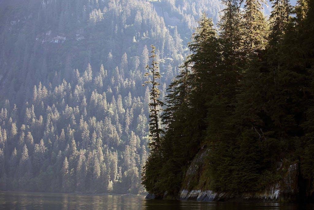 Misty Fjords, Alaska - salmon season