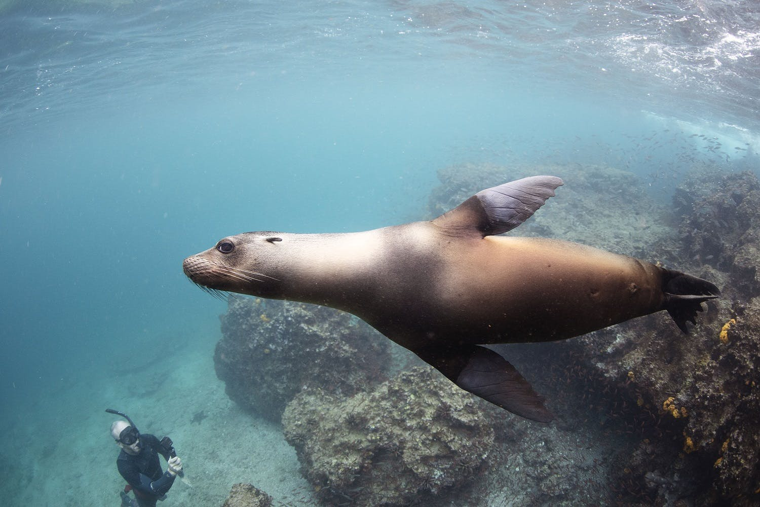 Galapagos photography tips
