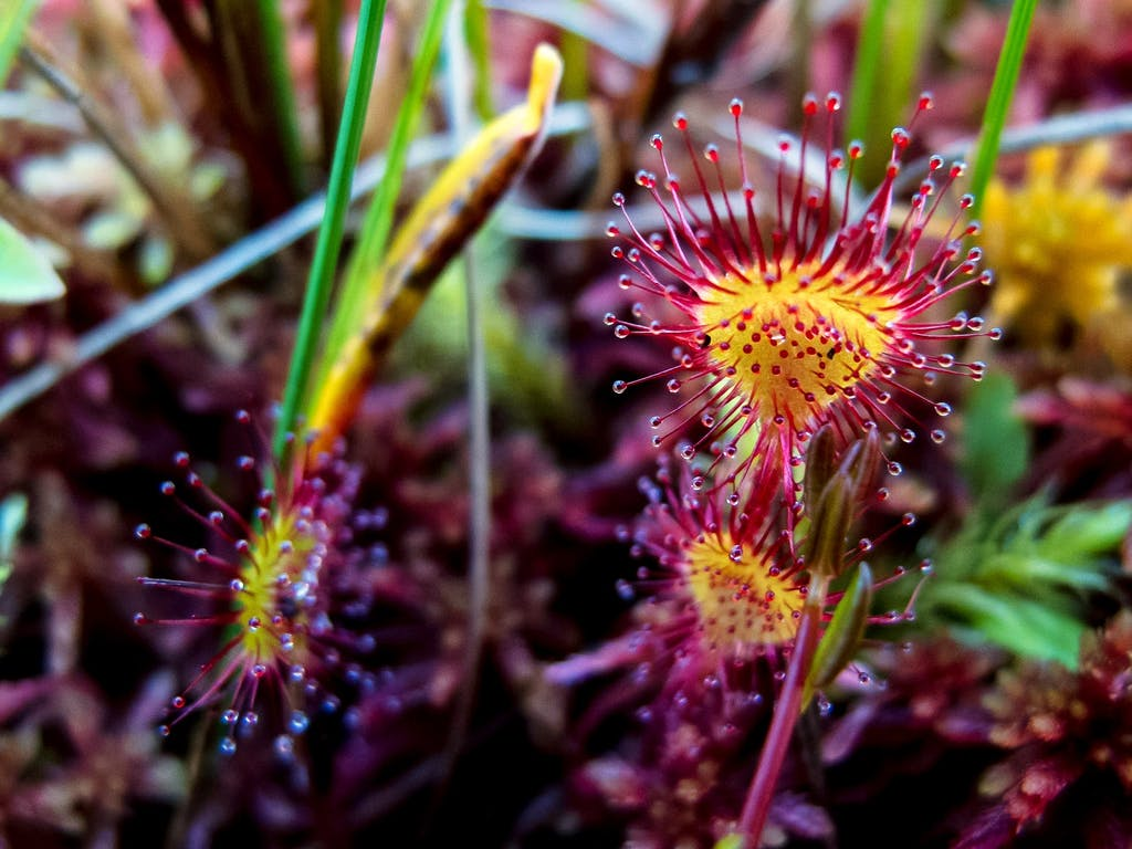 macro photography - flowers