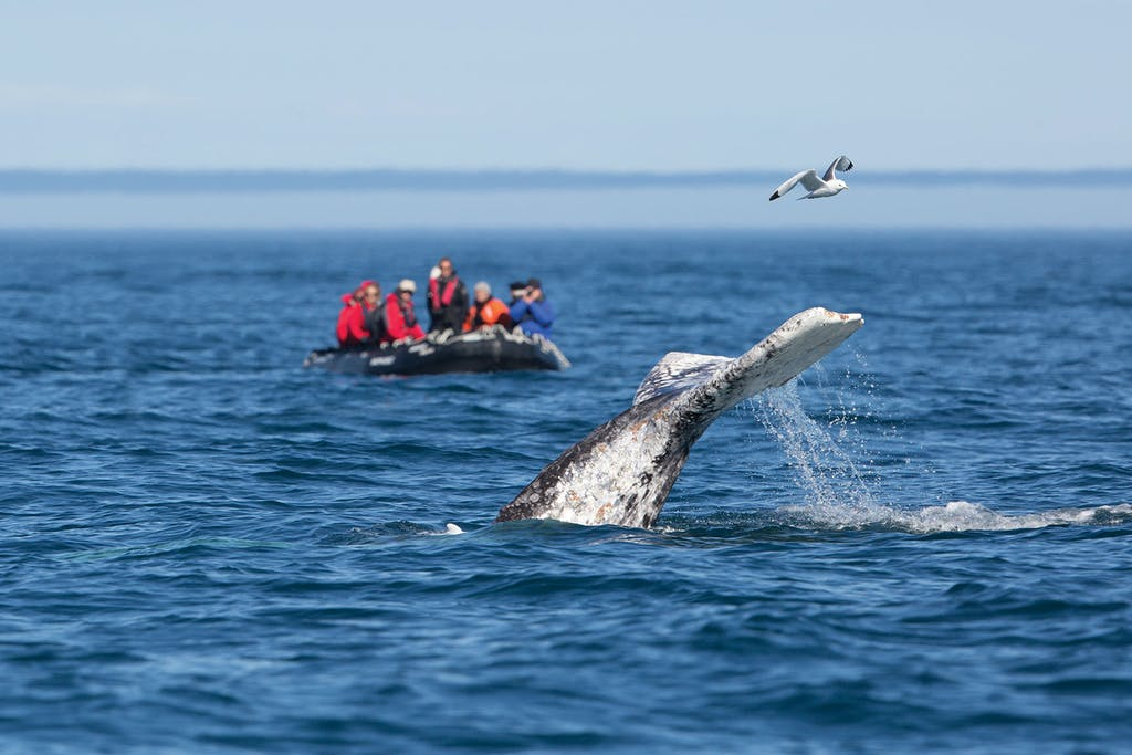 whale watching aboard a Russian Far East cruise