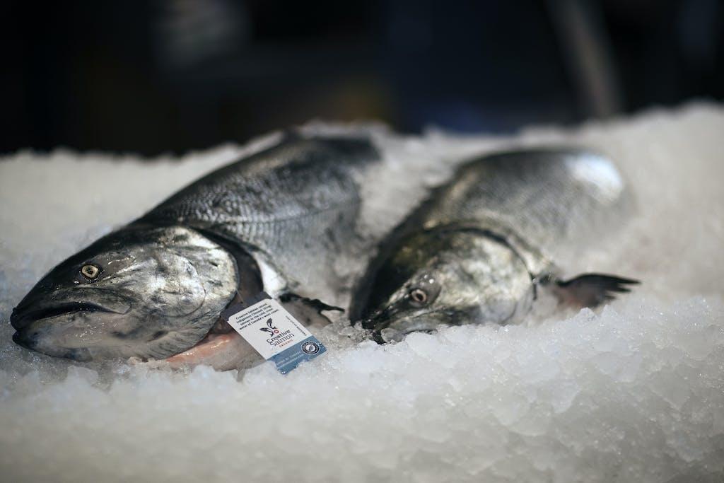 Fresh salmon for sale in an Alaskan market.