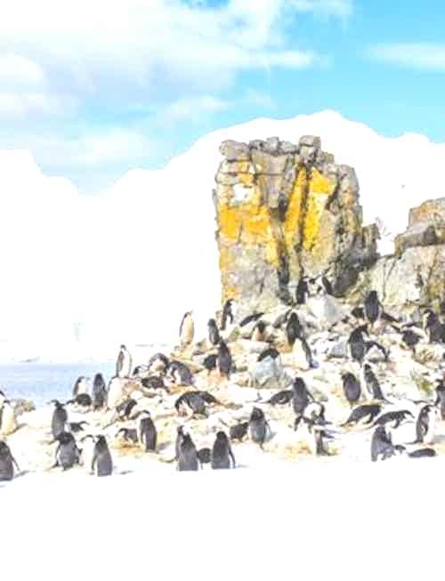 silversea-luxury-cruise-port-south-shetland-island