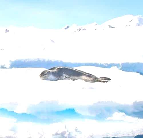 silversea-antarctica-cruise-leopard-seal.jpg
