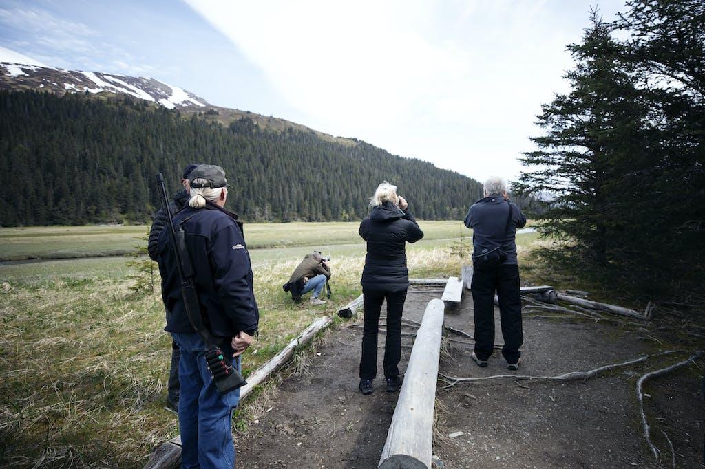 Spotting brown bears in Alaska