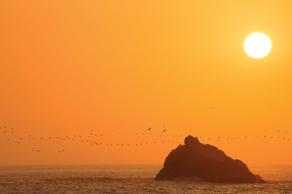 Seabirds in Salaverry, Peru