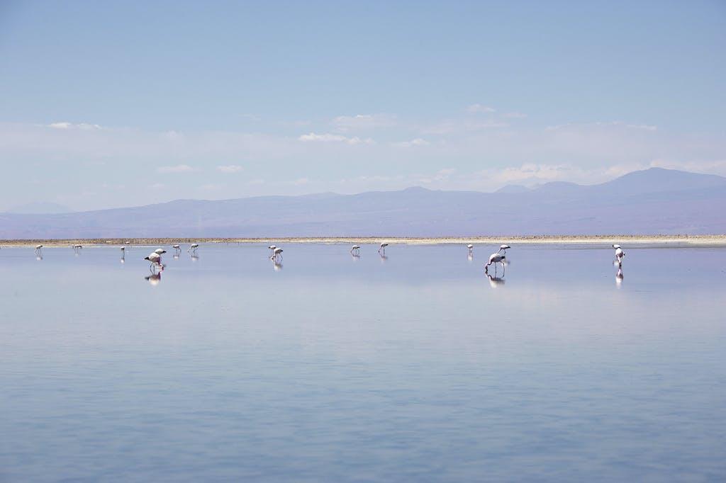 Atacama Salt Flats, Chile.