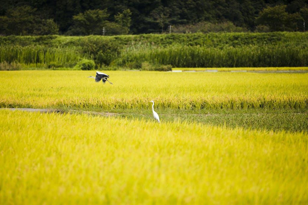 Nature in Sakaiminato, Japan.